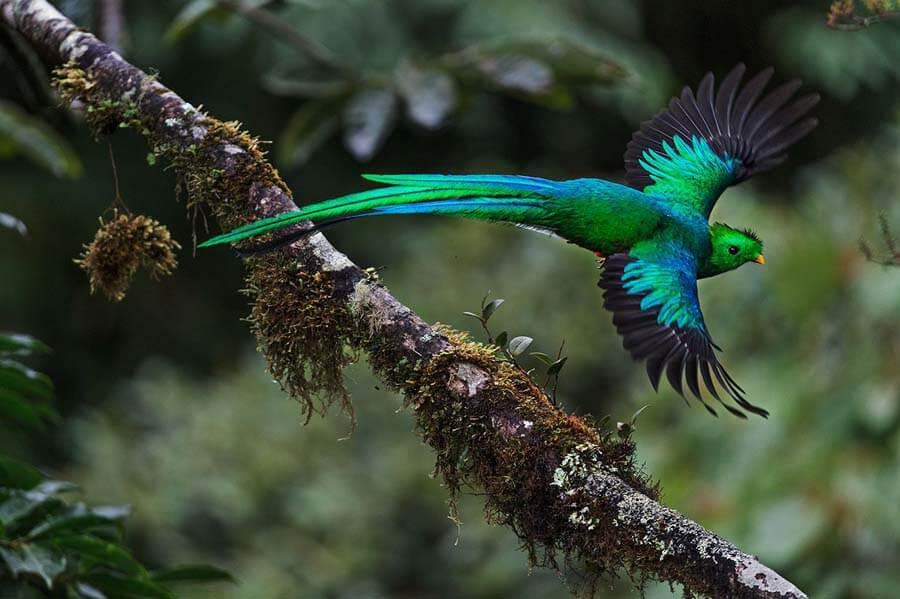 Motmot-Bird
